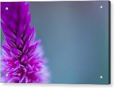 Purple Blur Acrylic Print
