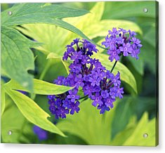 Acrylic Print featuring the photograph Purple Bunch  by Haleh Mahbod