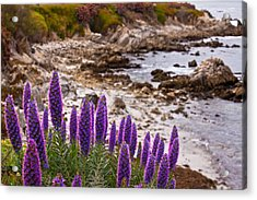 Purple California Coastline Acrylic Print by Melinda Ledsome