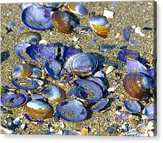 Purple Clam Shells On A Beach Acrylic Print