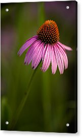 Purple Cone Flower Portrait Acrylic Print