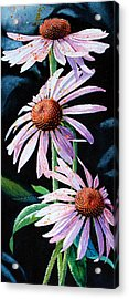 Purple Cone Flowers 1 Acrylic Print by Hanne Lore Koehler
