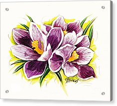 Purple Crocus Watercolor Acrylic Print by GG Burns
