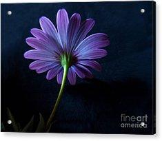 Purple Daisy Acrylic Print by Trena Mara