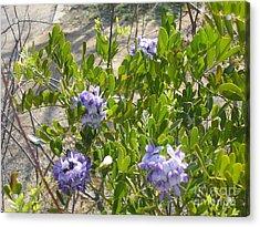 Purple Desert Flowers Acrylic Print