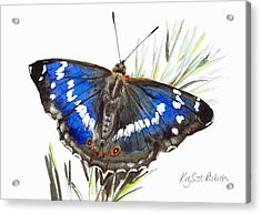 Purple Emperor Butterfly Acrylic Print by Katy Scott Ricketts