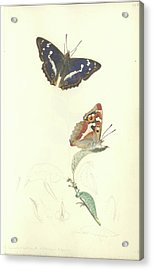 Purple Emperor Butterfly Acrylic Print by Natural History Museum, London/science Photo Library