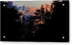 Purple Ending Acrylic Print by David  Norman