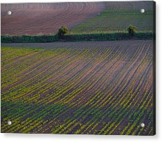 Purple Fields Acrylic Print by Evelyn Tambour