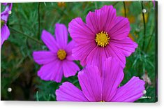 Acrylic Print featuring the photograph Purple Flower by Alex King