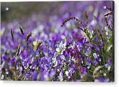 Purple Flower Bed Acrylic Print