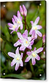 Purple Flower Acrylic Print by Bob Noble Photography