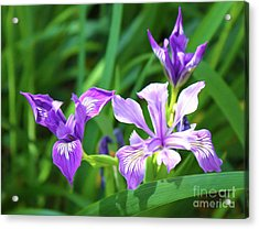 Purple Flower Acrylic Print by Gregory Dyer