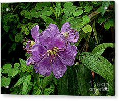 Purple Flower Acrylic Print by Sergey Lukashin
