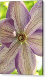 Purple Flower Acrylic Print by Thomas Leon