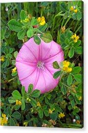 Purple Flower Acrylic Print by Tinki Pinki Art