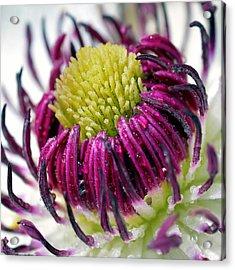 Purple Flower Acrylic Print by Tommytechno Sweden