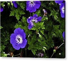 Acrylic Print featuring the photograph Purple Flower01 by Timothy Latta