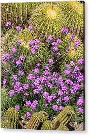 Purple Flowers And Barrel Cacti Acrylic Print