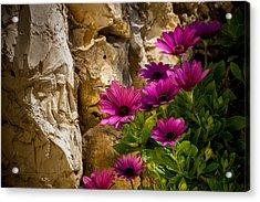 Purple Flowers And Rocks Acrylic Print