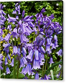 Acrylic Print featuring the photograph Purple Flowers by Gena Weiser
