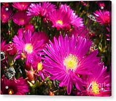 Purple Flowers Acrylic Print by Jelena Jovanovic