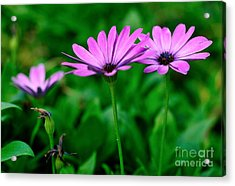 Acrylic Print featuring the photograph Purple Flowers by Joe  Ng