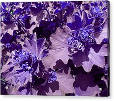 Acrylic Print featuring the photograph Purple Flowers by Laurie Tsemak