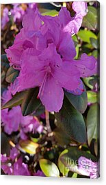 Acrylic Print featuring the photograph Purple Flowers by Rose Wang