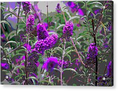 Acrylic Print featuring the photograph Purple Flowers by Suzanne Powers