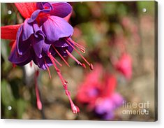 Acrylic Print featuring the photograph Purple Fuchsia by Scott Lyons