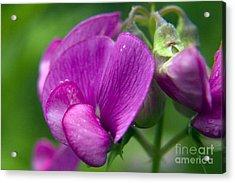 Purple Garden Flower Acrylic Print by Darleen Stry