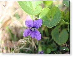 Purple Garden Flower Acrylic Print by Khoa Luu