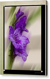 Acrylic Print featuring the photograph Purple Gladiolus Bloom by Patti Deters