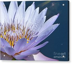 Purple Glory II Acrylic Print