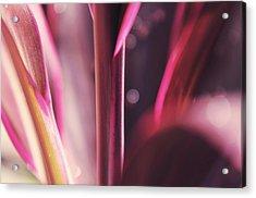 Purple Glow Acrylic Print by Jenny Rainbow