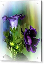 Purple Gloxinia II Acrylic Print
