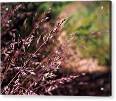 Purple Grass Acrylic Print by Kaleidoscopik Photography