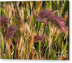 Acrylic Print featuring the photograph Purple Grasses by Meghan at FireBonnet Art