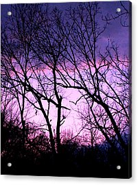 Acrylic Print featuring the photograph Purple Haze by Candice Trimble