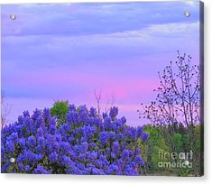 Purple Haze Acrylic Print by David Lankton