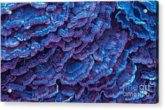 Purple Haze Acrylic Print by Sherry Lasken