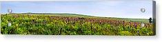 Purple Hills Acrylic Print