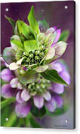 Purple Horsemint Wildflower Acrylic Print by Susan Schroeder