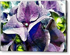 Purple Hydrangea  Flower Acrylic Print by Danielle  Parent