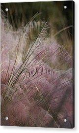 Purple In Bloom Acrylic Print by Patricia Twardzik