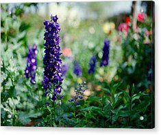 Purple In The Garden Acrylic Print by Linda Unger