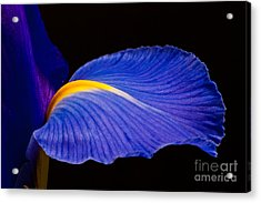 Purple Iris #1 2010 Acrylic Print by Art Barker