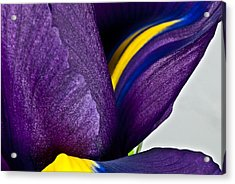 Purple Iris  #2 2010 Acrylic Print by Art Barker