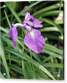 Purple Iris Acrylic Print by Denise Pohl
